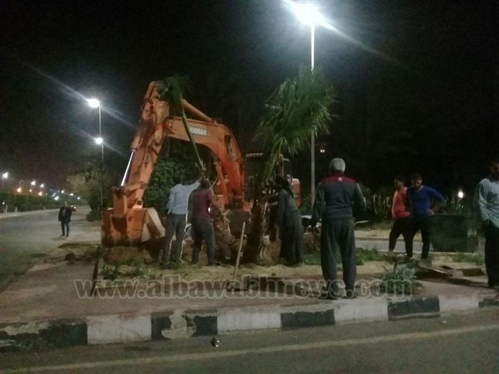 حملة جديدة لزراعة 2500 نخلة بمداخل ومخارج مدينة الشروق