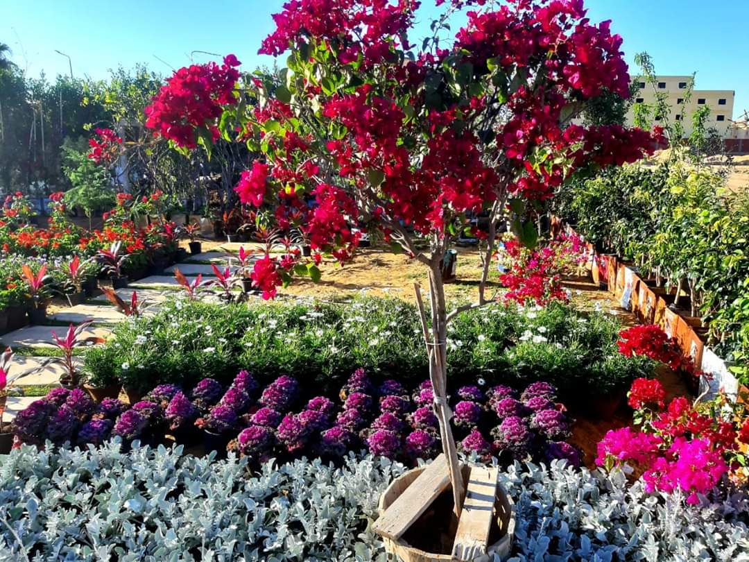 إفتتاح معرض زهور الربيع ٢٠٢٠ بمدينة الشروق